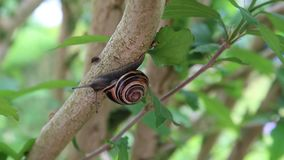 Snail and woodlouse stock footage