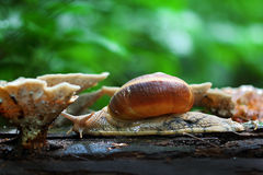 Snail. In the woods,close up Royalty Free Stock Photos
