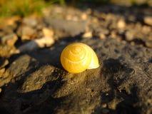 Snail. Stock Image