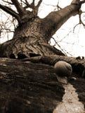 Snailen Fotografering för Bildbyråer