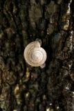 Snailen klättrar Royaltyfria Foton