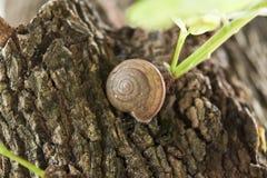 Snailen klättrar Arkivfoton