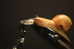 Snailen kryper på klockan Fotografering för Bildbyråer