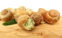 Snailescargot som förbereds som mat royaltyfria foton