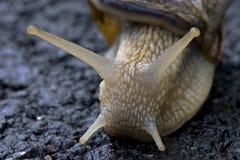 Snailface Image libre de droits