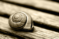 Snailhouse macro Royalty Free Stock Images