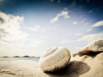 Snailhus på stranden (14) Royaltyfria Bilder