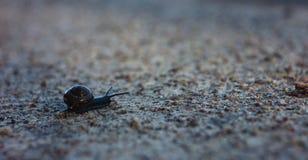 snailing在沙子路关闭的蜗牛 免版税库存图片