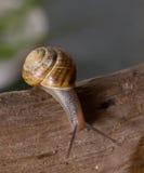 Snaill en un brach Fotografía de archivo