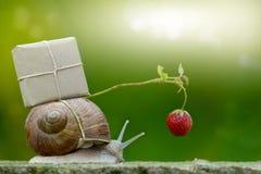 Snailmail, улитка с пакетом на раковине улитки стоковые фотографии rf