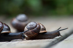 Snailrace Stock Photo