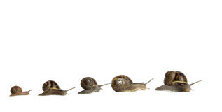 Snails royalty free stock image