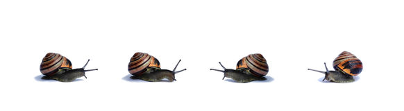 Snails. On a white background Royalty Free Stock Images