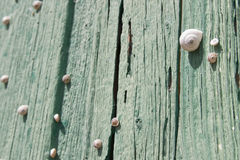 Snails. Graden snails on the old green door Stock Photo