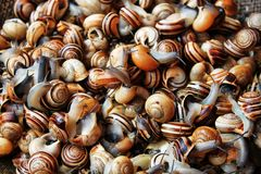 Snails. This is a photo of multi colored snails on the market stock photography
