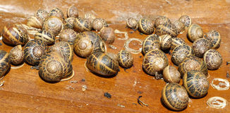 Snails. Sleep on wooden support Royalty Free Stock Images