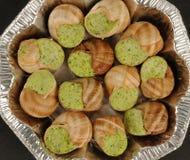 Snails Royalty Free Stock Photo