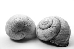 Snails. Two snail shells on a white background Stock Photography