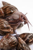 Snails Stock Photos