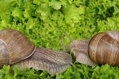 snails Royaltyfri Foto