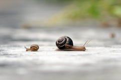 snails Fotografering för Bildbyråer