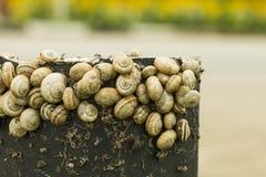snails Arkivfoto