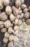 snails Arkivbilder