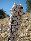 snails Royaltyfri Fotografi