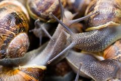 Snails Stock Photo