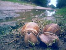 snails Royaltyfria Bilder
