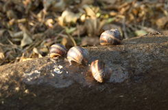 snails Royaltyfria Foton