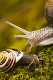 Snails royalty free stock photo