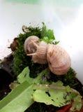 snails Royaltyfri Foto