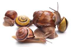 snails Royaltyfri Bild