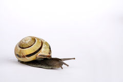 Snails. Composition Royalty Free Stock Photography