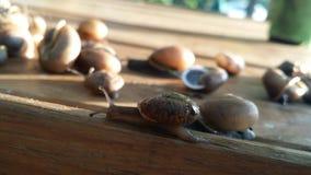 snails Arkivbild