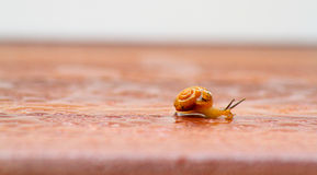 The snails in action Royalty Free Stock Photos