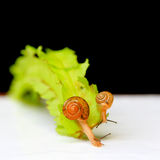 The snails in action Royalty Free Stock Photo