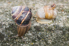 Snails and an Ant Stock Images