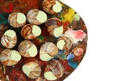Snails as gourmet food Stock Photos