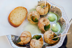 Snails as gourmet food with bread Royalty Free Stock Photography
