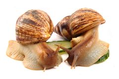 Snails as happy couple Royalty Free Stock Photos
