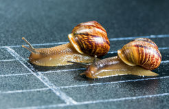 Snails on the athletic track Royalty Free Stock Image