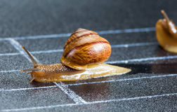 Snails on the athletic track Stock Photography