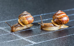 Snails on the athletic track Royalty Free Stock Images