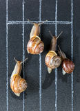 Snails on the athletic track Stock Photo