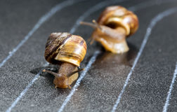 Snails on the athletic track. Moves the finish line Royalty Free Stock Image