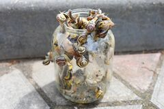Snails in the bank. snails are selected from banks