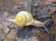 Snails on the bark of a tree. South Bohemia Stock Photo