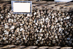 Snails on a Basket. On athens market Stock Photography